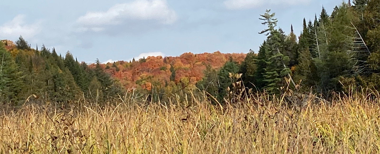 Fall colours in the beaver pond